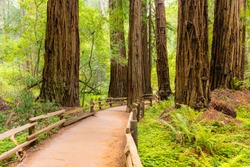 Muir Woods, National Park, California, EUA