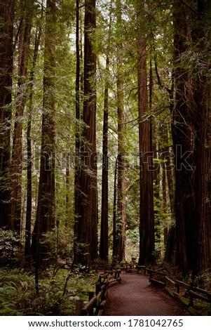 Muir Woods Walking Path in San Fransico California Сток-фото ©