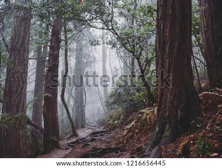 Muirs Woods CA #1216656445