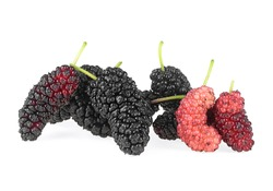 Mulberries fruit isolated on a white background. Pile of healthy mulberry fruit.