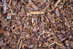 Mulch made of wood bark. Mulching is an agrotechnical way of covering the soil with a layer of organic or inorganic material.