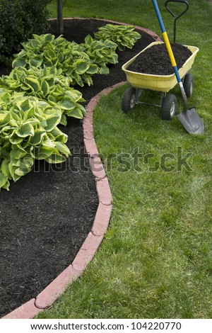 Mulching bed around hostas and wheelbarrow along with a shovel.