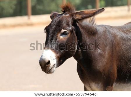 Mule #553794646