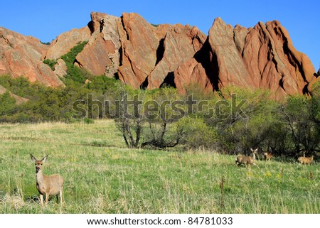 Mule deer in Roxborough State Park, near Denver, Colorado, Spring