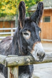 Mule is the offspring of a male donkey (jack) and a female horse (mare).