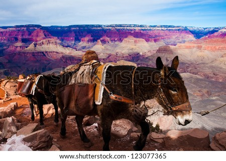 Mules Climbing up with Goods in  Grand Canyon National Park in Arizona, USA - stock photo