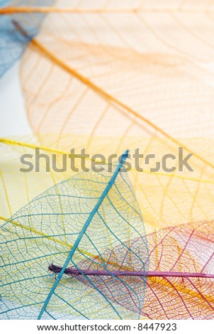 mult colored skeleton leaf background