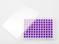 Multi channel pipette loading biological samples in microplate for test in the laboratory / Multichannel pipette load samples in pcr microplate with 96 wells.