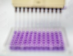 Multi channel pipette loading biological samples in microplate for test in the laboratory / Multichannel pipette load samples in pcr microplate with 96 wells. Blur view for background.
