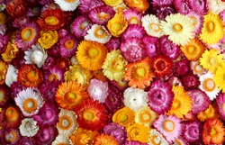 Multi Color flower background,colorful flower