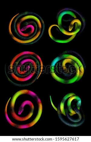 Multi-colored toy rubber snakes rolled up in a ball. Colored toy snakes. Rubber snakes. Toy snakes.