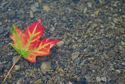 Multi coloured leaf floating in shallow water