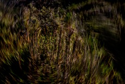 Multicolor abstract motion-blurred fynbos vegetation texture