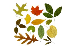 multicolor fallen dried autumn leaves on white background with text copy space