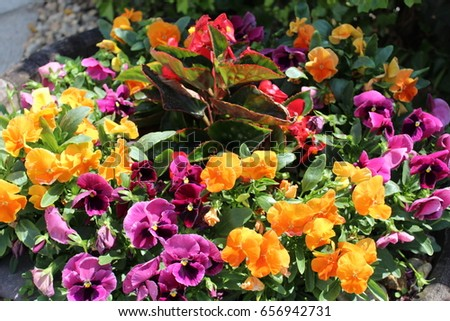 Multicolor flowers #656942731