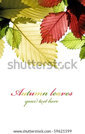 Multicolor leaves on the white