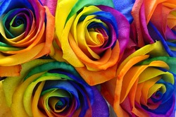 Multicolor roses flower bouquet : rainbow rose with colorful petals, macro for background