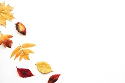 Multicolored autumn leaves on a white background. Nearby copy space.