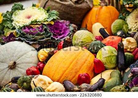 Multicolored autumn season vegetables assortment