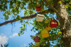 Multicolored birdhouses on a tree, against the sky.