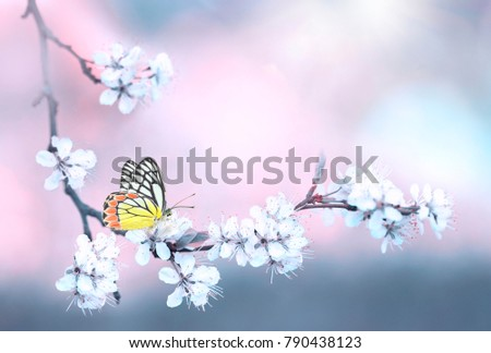 Multicolored butterfly on branch of blossom cherry in spring close-up macro on nature on pink and gray blue floral background.  For easter greeting cards with copy space, free space for text.