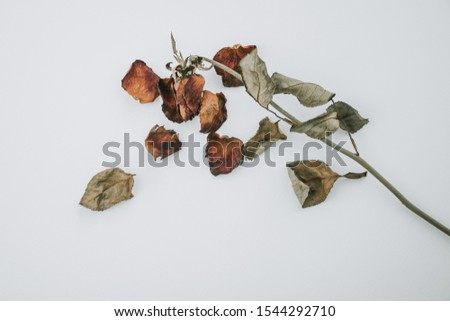 Multicolored dried flowers and dried roses