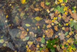 Multicolored fallen leaves and tree seeds, frozen in the first thin transparent ice. The reflection of the clouds. Autumn background.