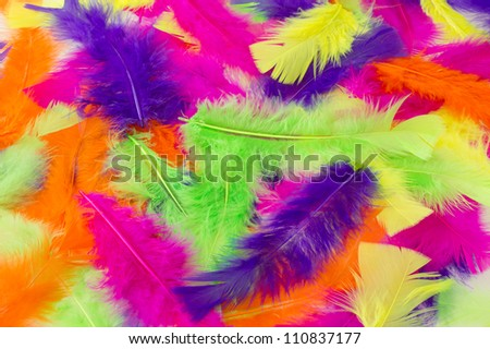 Multicolored feathers as a background