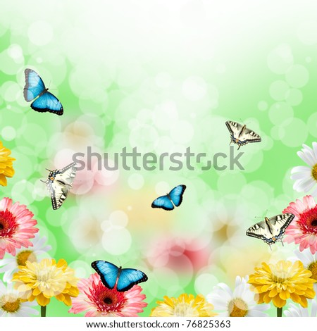 Multicolored flowers and butterflies on the soft green background
