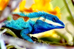 Multicolored lizard  in garden