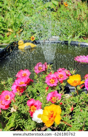 Multicolored portulaca on the background of a small pond with a fountain