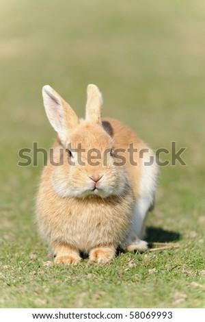 multicolored rabbit on green grass