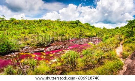 Multicolored river in Colombia, Cano Cristales #606918740