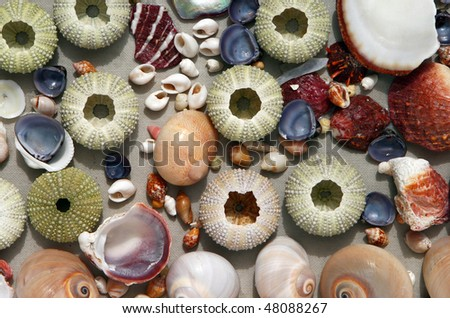 Multicolored seashells and sea urchins on a light gray background.