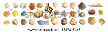 Multicolored Seashells Big Collection Isolated on White Background Top View. Set of Brown, Yellow and Grey Clam Mollusc Shells