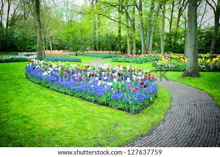 Multicolored tulips in Keukenhof Gardens, Netherlands - stock photo
