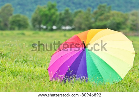 multicolored umbrellas in a meadow of green grass