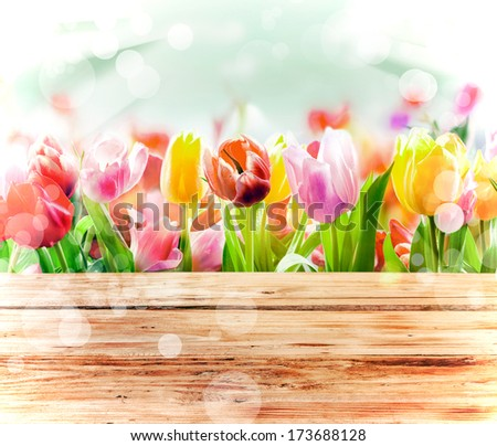 Multicoloured fresh spring tulips outdoors behind a rustic wooden fence in bright sunlight with a sparkling bokeh or dancing light