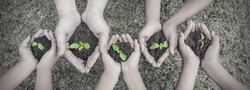 Multicultural hands of adult and children holding young plant over green grass background. Earth day environment friendly harmony together spring black and white plant base concept panoramic banner.