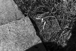 Multiple cigarette butts being dumped in the grass