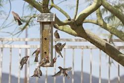 Multiple finches flying around bird feeder