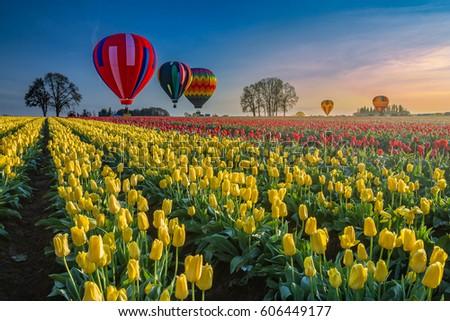 multiple hot air balloons...