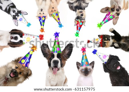 Multiple Pet Animals Isolated Wearing Birthday Hats for a Party #631157975