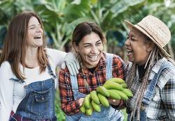 Multiracial senior women with a bunch of green bananas - Farmer people having fun working at banana plantation - Soft focus on mature latin woman