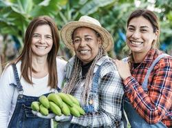 Multiracial senior women with a bunch of green bananas smiling in camera - Farmer people having fun working at banana plantation