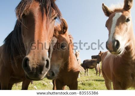 Mum and her 2 horses
