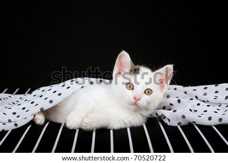 Munchkin kitten on black and white fabric