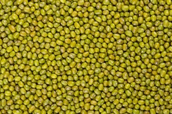 Mung beans, background, from above. Also known as green gram, maash, moong, monggo or munggo. Whole, dried, raw seeds of Vigna radiata, a legume, used cooked or sprouted. Backdrop. Macro, food photo.