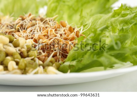 Mung, lentil, rye and chick-pea sprouts
