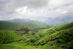 Munnar is a town in the Western Ghats mountain range in India's Kerala state. A hill station and former resort for the British Raj elite, it's surrounded by rolling hills dotted with tea plantations.